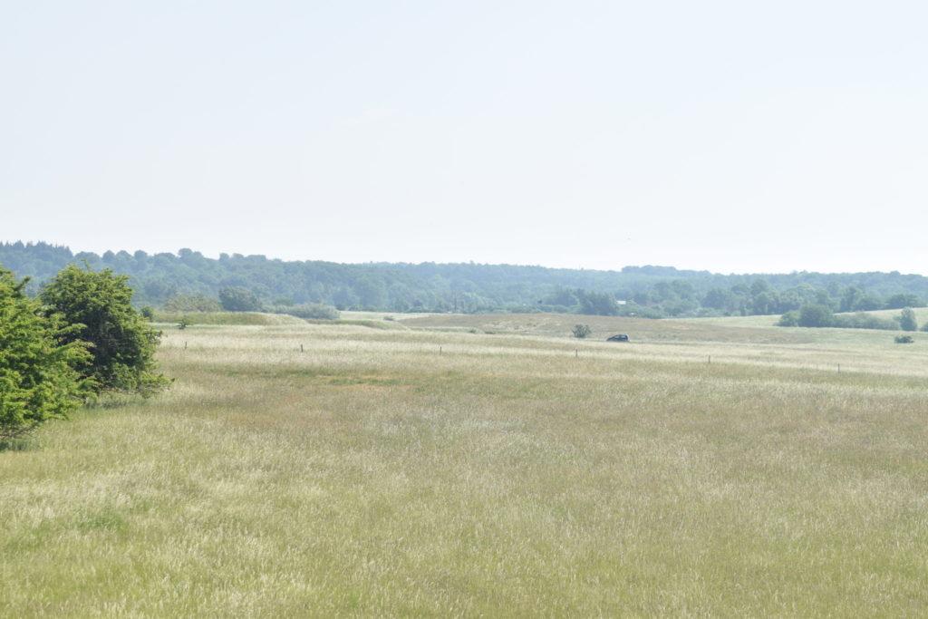 Naturoplevelser. Flyvestation Værløse. Violetrandet ildfugl. Udsigt over den sydøstlige del af Flyvestation Værløse hvor Violetrandet Ildfugl har sit habitat. Det er normalt mere grønt, men det er også længe siden det har regnet.