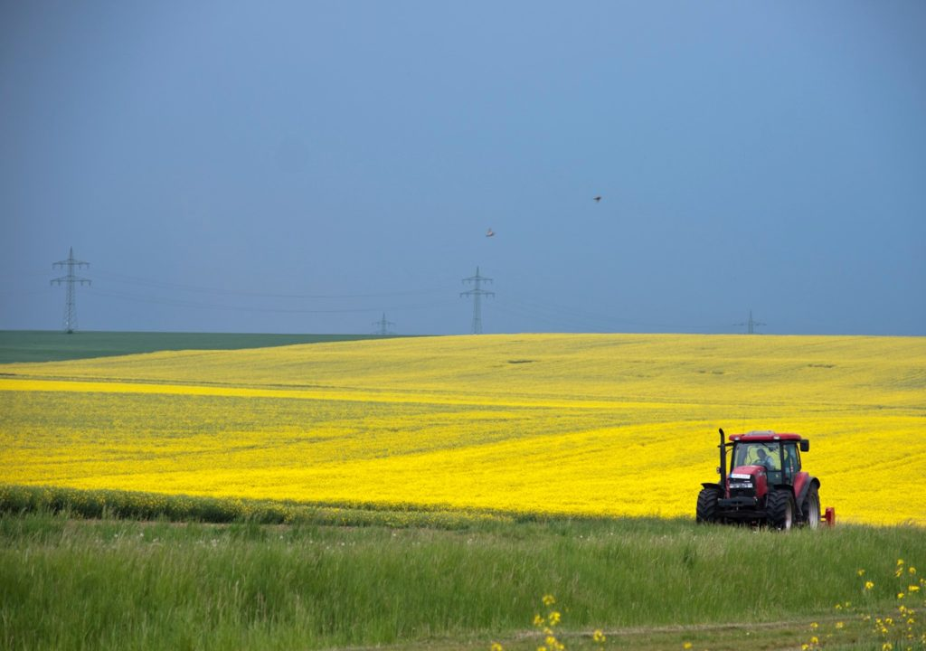 Rapsmark i Danmark. Vores land er 60 % dækket af landbrug, vi kunne give lidt af pladsen til enge eller overdrev i stedet, så dyr, planter og svampe har nogle flere steder at bo.