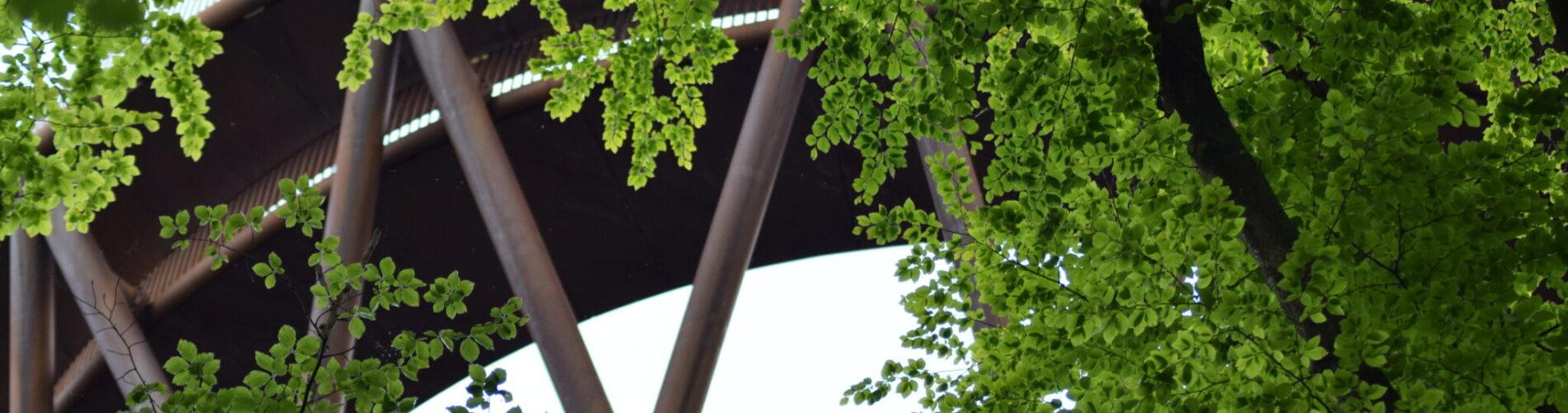 Skovtårnet ved Camp Adventure på Sjælland. En oplevelse ud over det sædvanlige.