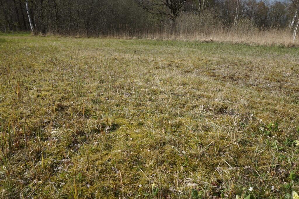 Lav vegetation i Børstingerød mose for Mørk Pletvinge larvens skyld. Forvaltning af Mørk Pletvinge (Melitaea diamina), forvaltning af dagsommerfugle, ildfugl.com.