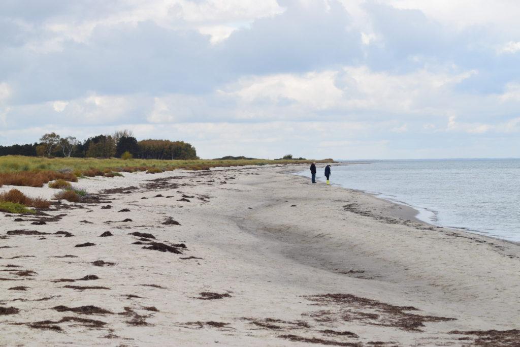 Den smukke Ulvshale Nordstrand i oktober måned. Stranden er også et besøg værd om efteråret. Ulvshale Nordstrand, Oplev spændende Møn.