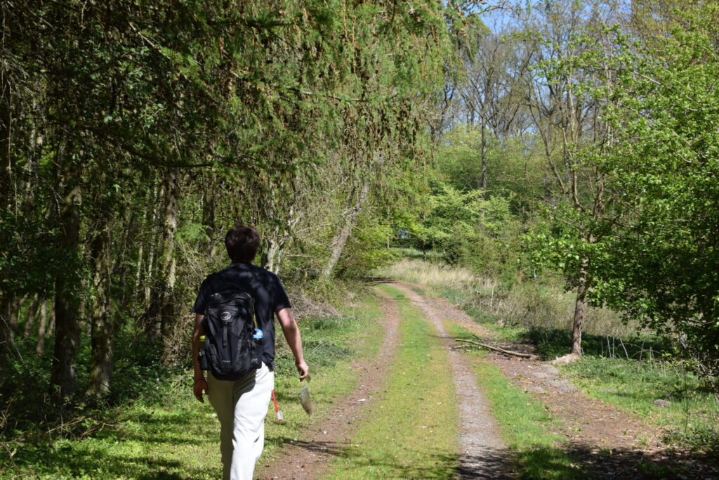 Aurora (Anthocharis cardamines) trives blandt andet langs veje i skove, hvor der vokser korsblomster langs vejkanten. Her kan den få både læ og masser af sol mens den indtager næring. Billedet er taget på Bognæs den 29 april 2019 af Zelina Elex Petersen. Aurora Forvaltning, Forvaltning af dagsommerfugle. Ildfugl.com