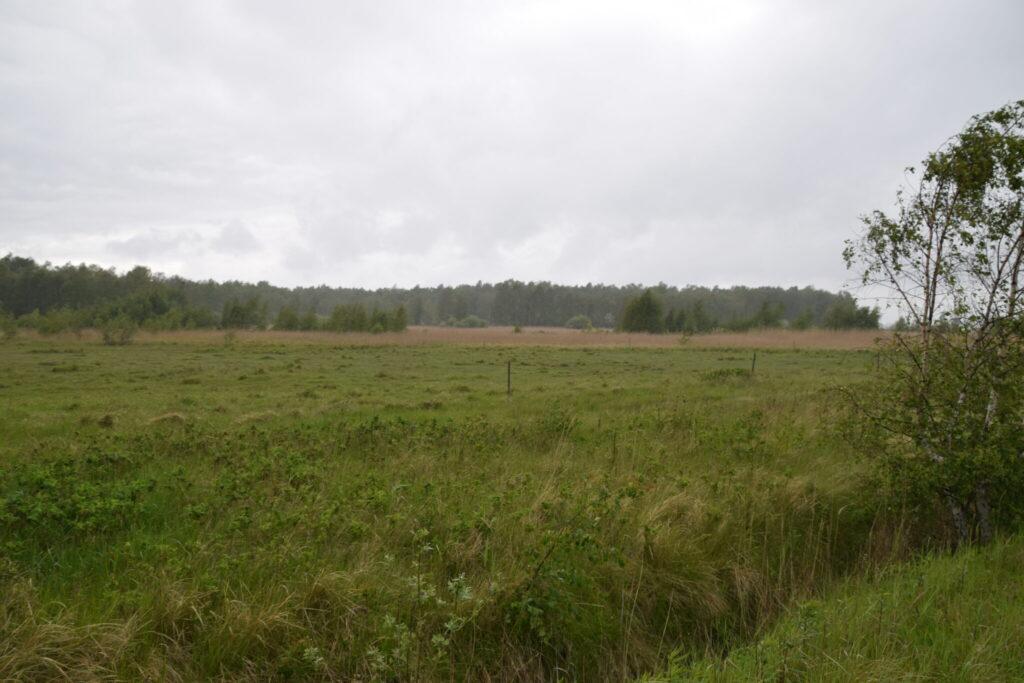 Kalvebod Fælled i sin åbne pragt en regnvejrsdag i maj. I baggrunden ses Pinseskoven.