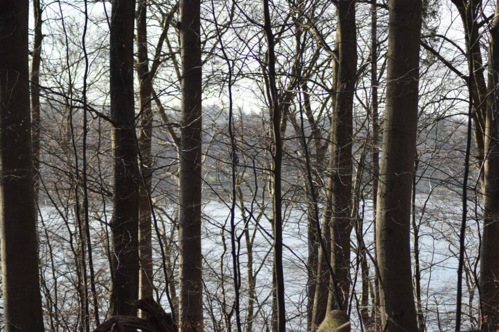 Skoven i februar er helt nøgen, men bestemt perfekt formet i al sin enkelthed. Den rejser sig højt over Bagsværd sø, med hjælp fra terrænet. Jeg håber jeg lærer at tage billeder der bedre viser skovens storhed udfra min opfattelse af den. Naturen nær Bagsværd sø.