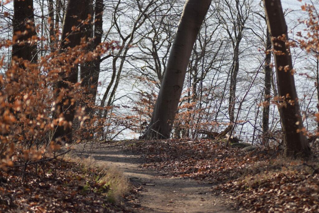 Vi fulgte stien gennem skoven. Den første os ned langs Bagsværd sø. Her kunne vi høre lyden af primært tre elementer. 1. Små bølger der slog mod træernes underlag, 2. Vinden der snoede sig mellem træerne og 3. Fuglene der sang fra trækronerne. Centrum for sanserne idag var træerne. Naturen Nær Bagsværd sø.