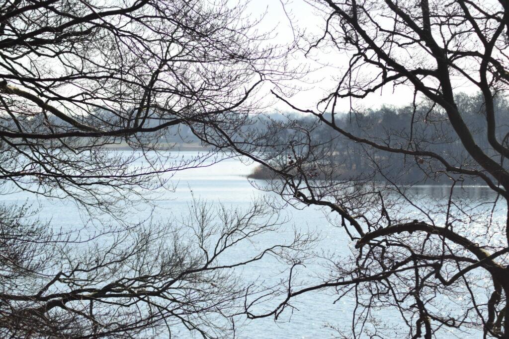 Udsigten over Bagsværd sø fra nordvest. Selv om vinteren er her smukt. Naturen nær Bagsværd sø.