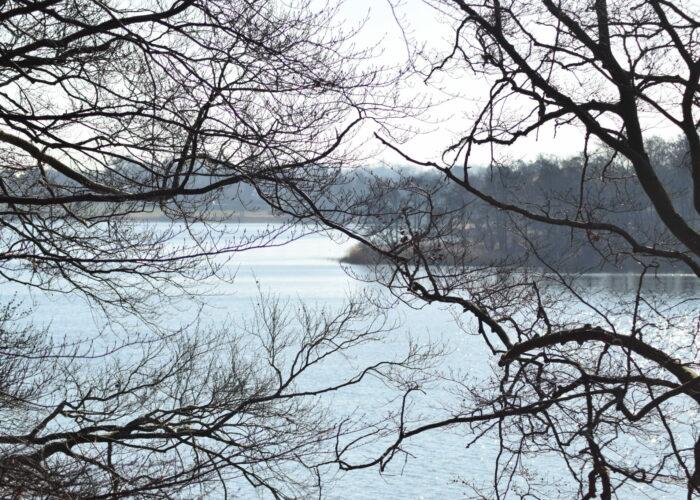 Udsigten over Bagsværd sø fra nordøst (Frederiksdal). Her er helt sikkert også smukt om vinteren. Naturen nær Bagsværd sø.