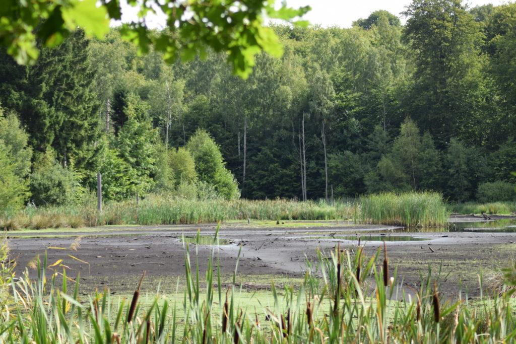Prøv at forstille jer, hvor smuk Store Brænteljung sø er normalt. Det er et fantastisk syn man normalt møder mellem træerne. Som heldigvis stadig er meget grønne.