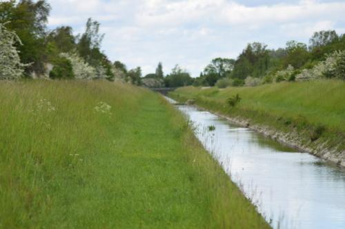 Kanalen langs kanalvej hvor jeg ledte efter den sjældne og skønne Rådplettede blåfugl (Aricia agestis). Jeg kunne høre Grø frø (Rana Esculenta) hele vejen.