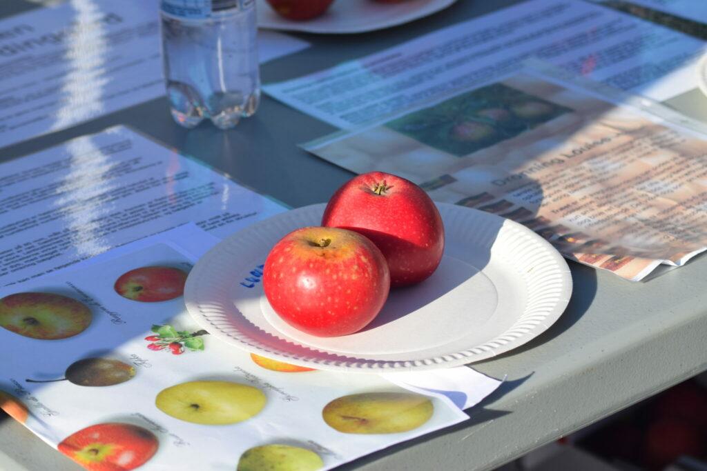 Hvilket æble? Jeg kan ærlig talt ikke huske det. Men der var en æbleekspert tilstede til Æblernes dag på Storegade i Stege (Møn). Hun kunne identificere de æbler man havde med.