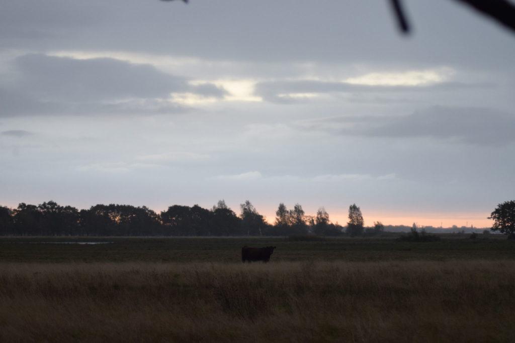 Ulvehale eng på Møn i de smukke morgentimer.