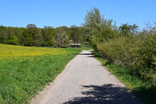Grusvejen går forbi Kongehøjen og videre mod Bognæs, forbi nogle lidt kedelige men smukke græsmarker med Mælkebøtter.