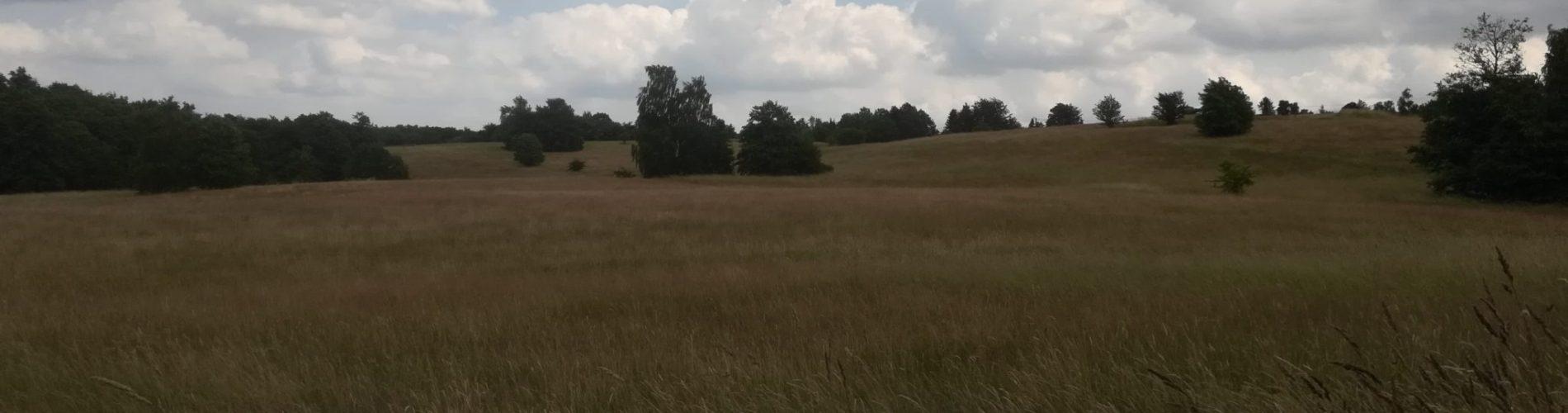 Udsigt over Baunesletten set fra den lavest liggende del af området.