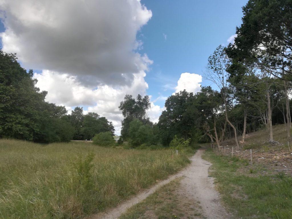 Øvre Mølle ådals smukke natur. Naturoplevelser. Naturstyrelsen har åbnet skovkanten af Krogenlundskoven, så der bliver mere lyst. Den åbne skov vil og få år myldre af planter og insekter.