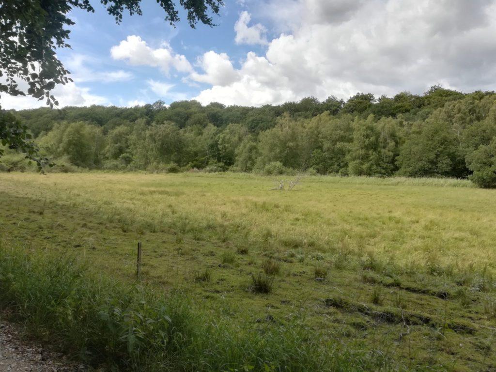 Øvre Mølle ådals smukke natur. Fra stien gennem tunnedalen kan man se den afgræssede eng med Krogenlund skoven i baggrunden.