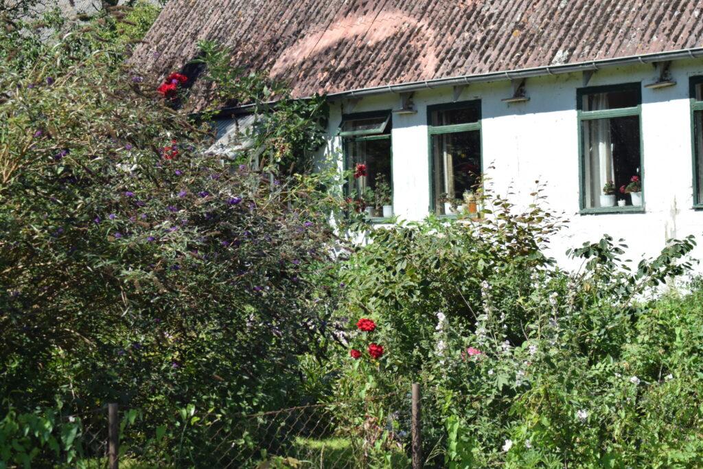 En gammel have i Nyord by med masser af gamle danske planter. Men også en sommerfuglebusk godt besøgt af individer af Admiral (Vanessa atalanta), Dagpåfugleøje (Aglais io) og Nældens Takvinge (Aglais urticae). Beskyttelse af Nældens Takvinge. Beskyttelse af Dagsommerfugle. Ildfugl.com
