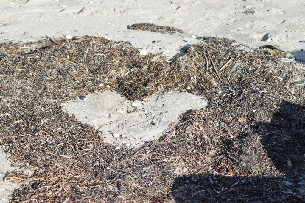 Naturens finurligheder har lavet et hjerte af Ålegræs aka. Almindelig bændeltang (Zostera marina). Ulvshale Nordstrand, Oplev spændende Møn.