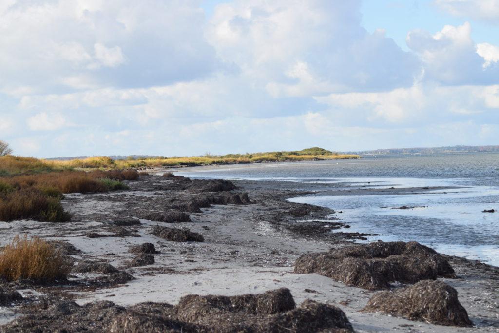 Sandstranden udvikler sig til en lækyst lige så stille og smukt. Ulvshale Nordstrand, Oplev spændende Møn.