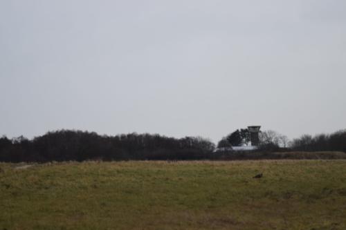 Udsigt over Flyvestation Værløse i januar. Man kan se kontroltårnet i baggrunden. I forgrunden en Musvåge (Buteo buteo).